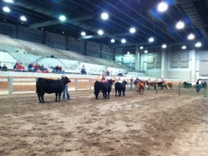 2016 Michigan Beef Expo Simmental Show & Sale