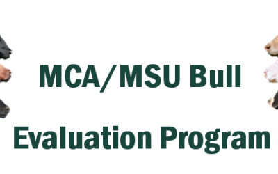MCA/MSU Bull Evaluation Program Update